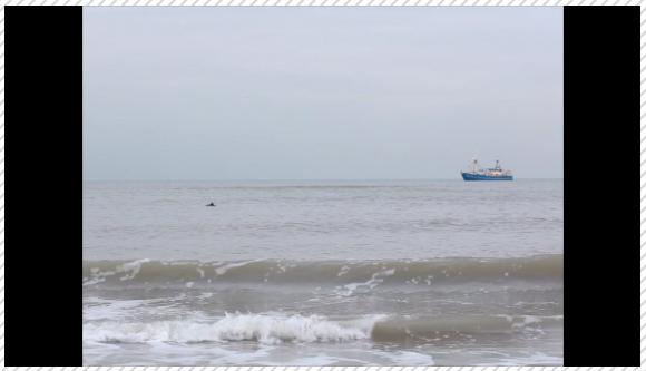 De bruinvis in het filmpje van de crowdfundcampagne op Voordekunst