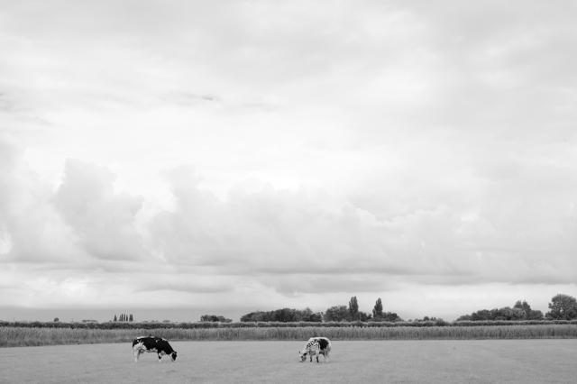 PHOTOLOGIX_IJssel_Koeien-1207